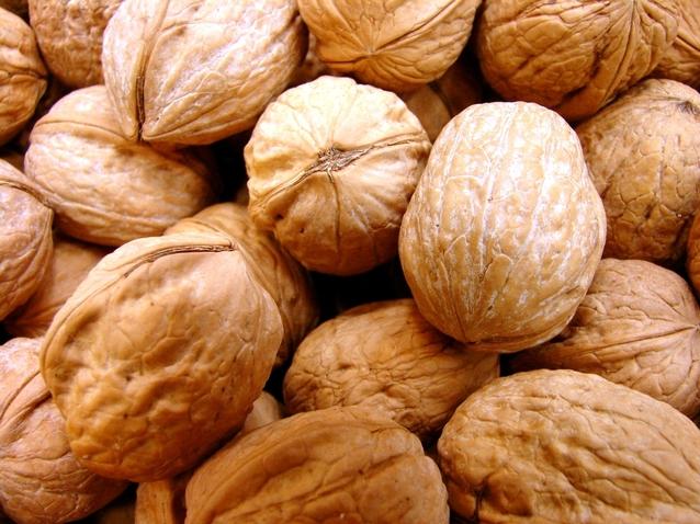 plody vlašského ořechu
